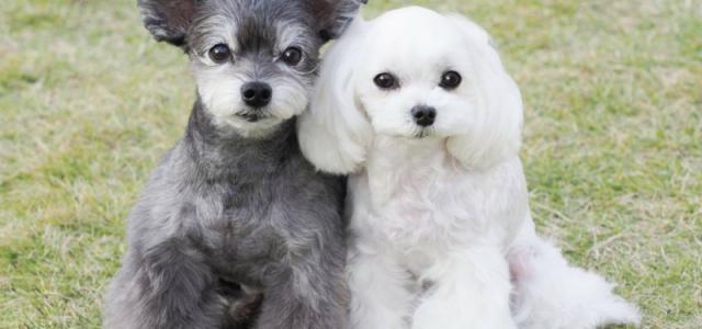 ペット見守り家族信託